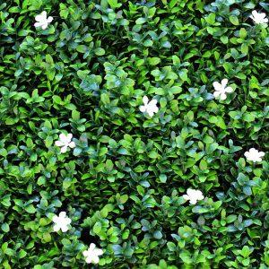 flor-de-lis-1